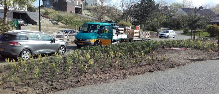 aanplant Noordwijk